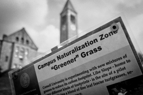 outdoor sign explaining campus naturalization efforts